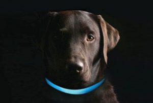 collar led perro