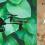 La mejor tecnología para cuidar de las plantas